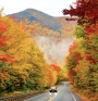 There are great places all across New England for leaf peeping