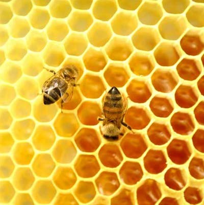 Golocalworcester Central Ma Beekeepers Link Hive